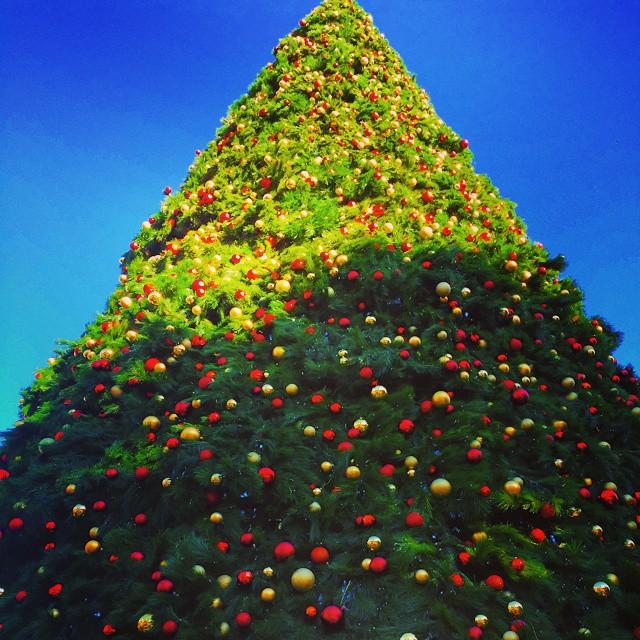 Very large Christmas tree