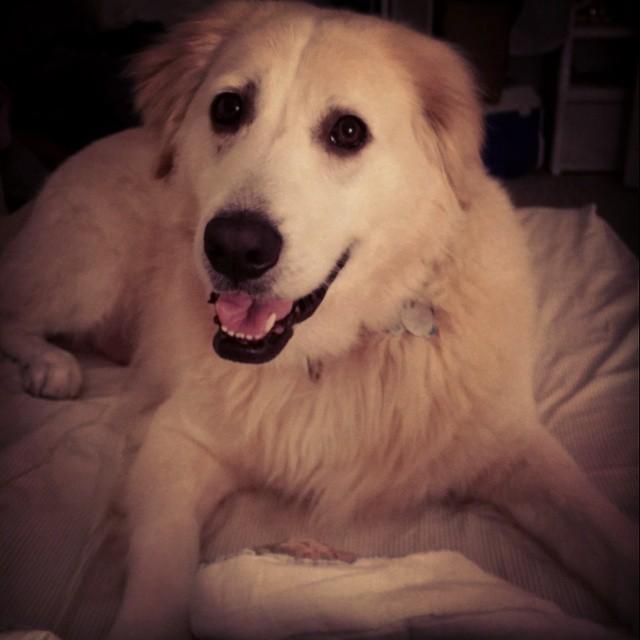 Hamlet, the dog, smiles
