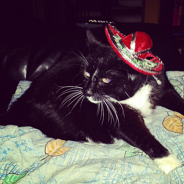 Gato lays on a blanket and wears a Mexican hat