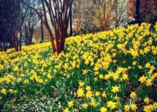 Springtime at Woodruff Park