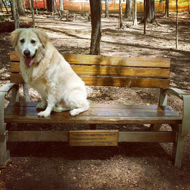 Hamlet sits on a bench at Brook Run Dog Park