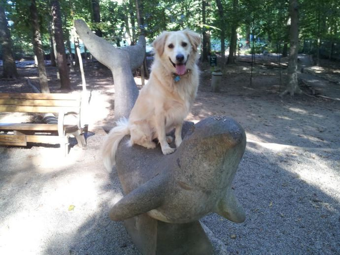 Hamlet on a statue at the dog park